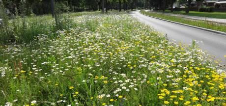 Oosterhout wordt vriendelijker voor de bijen en vlinders: 'Alleen hebben we er te lang op moeten wachten'
