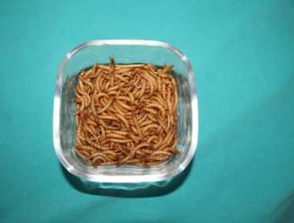 Eerste insect voor menselijke consumptie goedgekeurd in EU