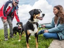 Zoetermeerse honden brengen elk jaar ruim half miljoen op