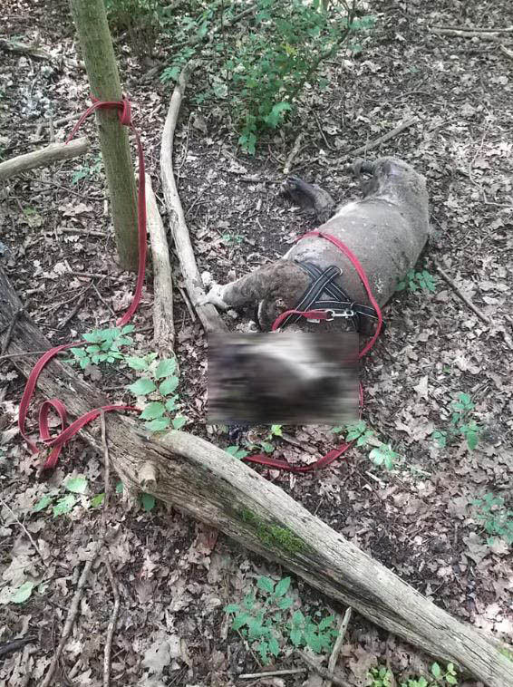 De gevonden hond in het Wilhelminapark in Rijswijk.