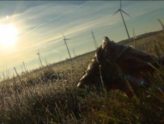 Hier komt grootste zonnepark van Benelux
