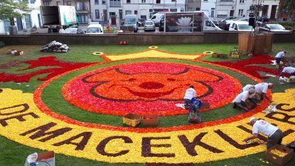 600.000 begonia's kleuren bloementapijt van 1.000 vierkante meter