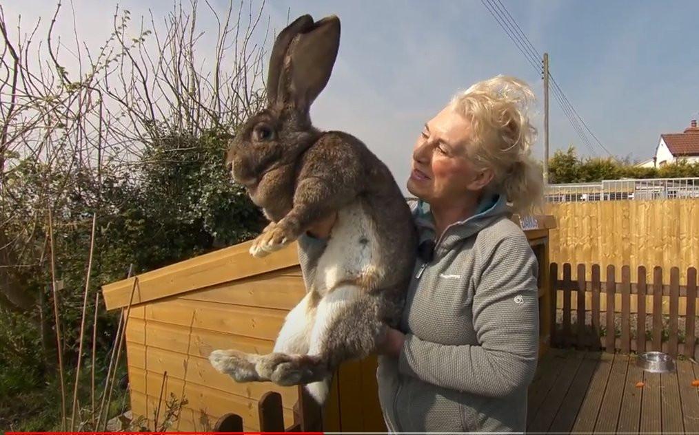 Annette et Darius, son lapin géant