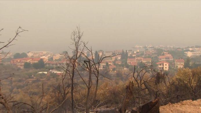 In de voorgrond: verbrande takken en bomen, in de achtergrond een aantal woningen dat gevrijwaard bleef van het vuur
