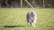 Honden krijgen losloopzone in Herkenrodebossen