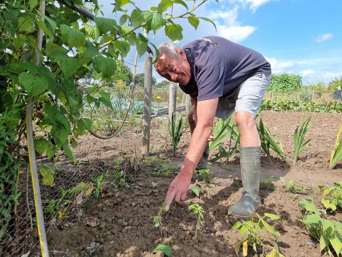 Henk Wesseldijk bij zijn mislukte oogst