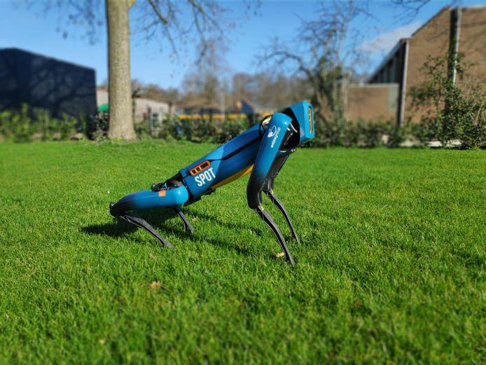 Medewerkers van Antea Group oefenden dit weekend met robothond Spot, ook in de tuin. Spot kan ook zitten.