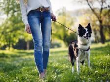 Toch extra plek voor honden in Biesbosch