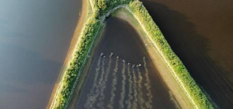 Vissers gaan op jacht naar verdwaalde karpers in ondergelopen weiland bij Oeffelt