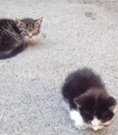 Dierenambulance Gouda redt uitgedroogde katjes uit kelderbox