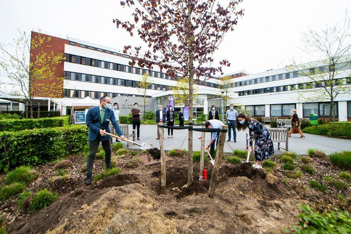 Pieter Jan Simons (hoofdarts AZ Voorkempen), Sven Beersmans (voorzitter huisartsenkring Malle-Zoersel-Zandhoven) en Vicky Van Camp (voorzitter Eerstelijnszone Voorkempen) helpen de esdoorn planten