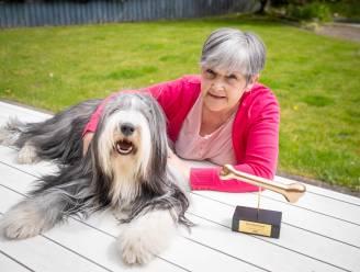"""Monique wint met Des wedstrijd 'De Harigste Hond van Vlaanderen': """"Elke week 2,5 uur aan het kammen, dat schept een intense band"""""""