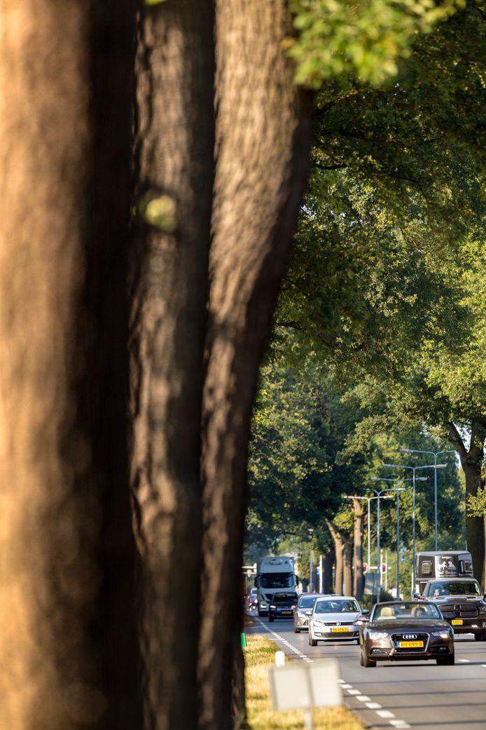 De N65 bij Vught waar een botsing met een boom, zoals op veel N-wegen, altijd op de loer ligt.