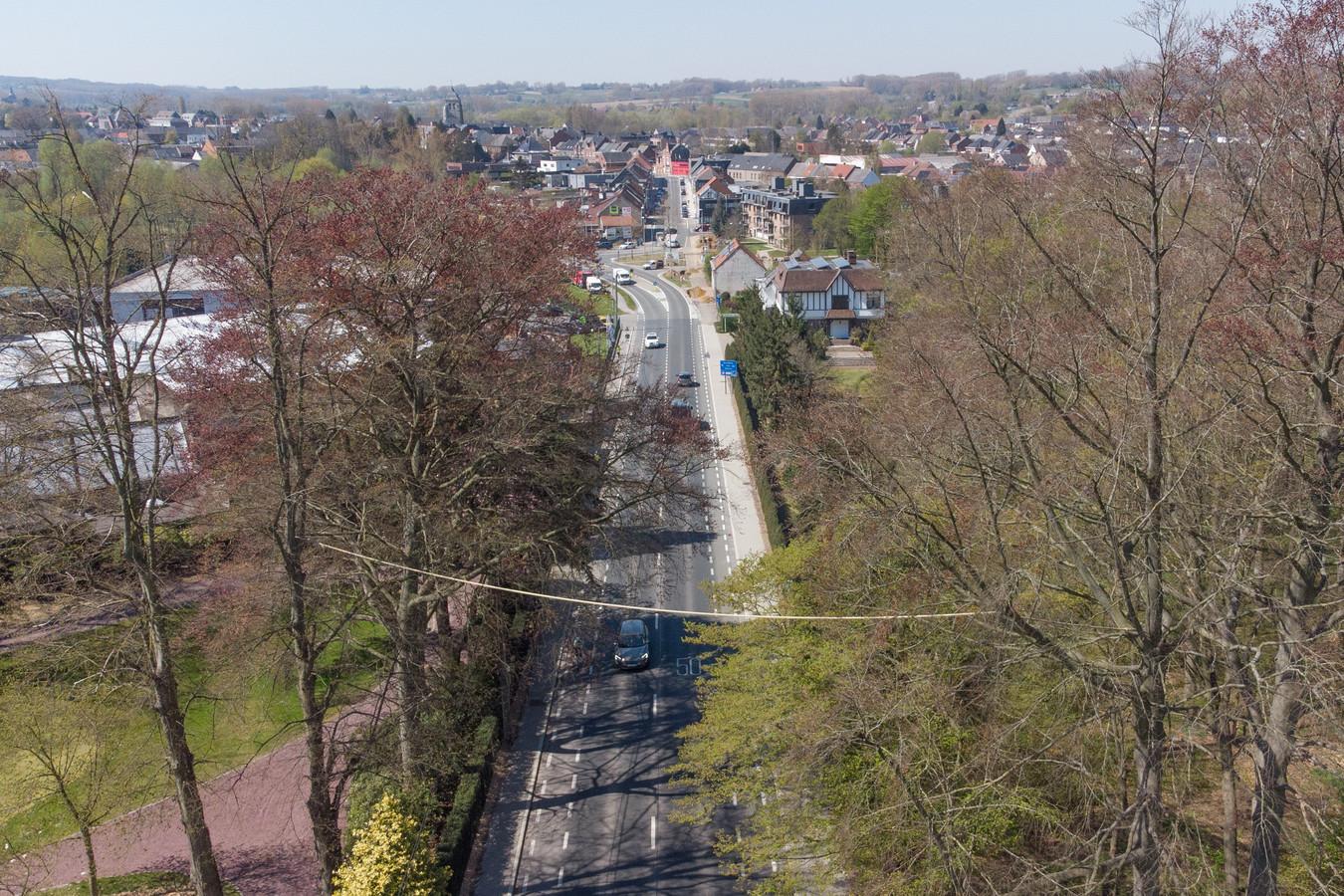 De eerste eekhoornbrug in de Vlaamse Ardennen werd opgehangen tussen twee bomen aan beide kanten van de Brusselsestraat in Nederbrakel.