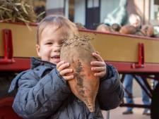 Gratis voederbietlampion voor de Sint Martinusoptocht door Groningen