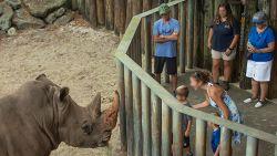 """Neushoorns zullen """"niet gestraft worden"""" nadat peutertje in hun verblijf in zoo in Florida viel"""