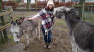 Eigenaar verloren gelopen ezels terecht