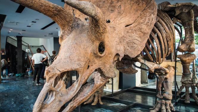 Skelet van 66 miljoen jaar oude dinosauriër 'Big John' te koop