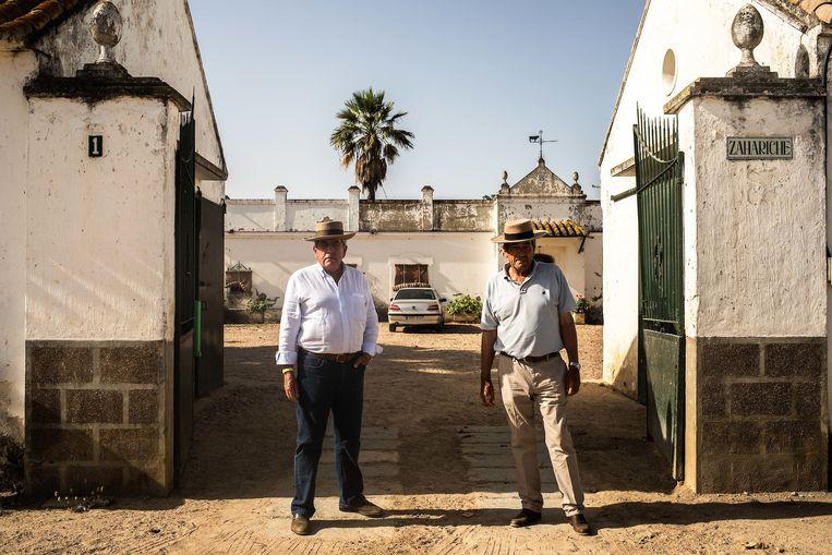 De broers Antonio and Eduardo Miura kweken stieren en vinden de kritiek op stierenvechten hypocriet: 'Niemand heeft er een probleem mee als dieren sterven in een slachthuis.' Beeld César Dezfuli