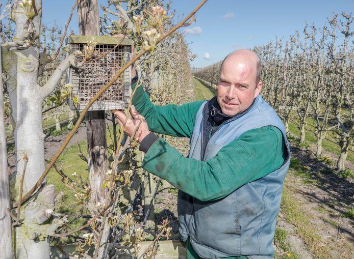 Jan Peter van 't Leven bij een van de vele bijenhotels in zijn perenboomgaard.