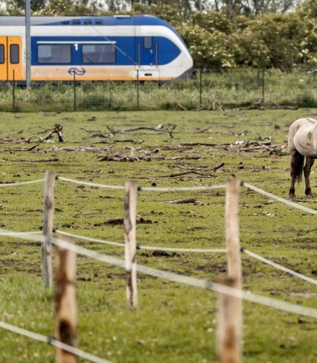 Partij voor de Dieren: 'Konikpaarden Oostvaardersplassen hebben beschutting nodig'