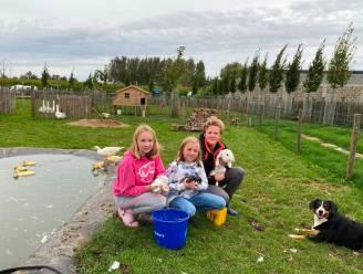 """Catherine start kinderboerderij voor klasgroepen: """"Met een zestigtal dieren, oneindig veel kriebeldieren en domein Steenberg vlakbij"""""""