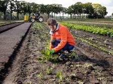 Herenboerderij De Groote Heide in Soerendonk weer volledig in bedrijf na korte leverstop