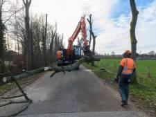 Bijl in zieke bomen Veenendaal