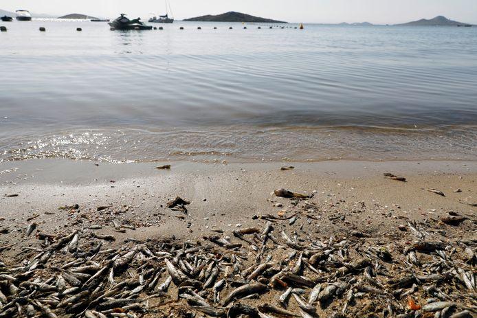 """Des poissons et des crustacés morts gisent sur le rivage de la plage """"Cala del Pino"""", dans la lagune Mar Menor de Murcie, en Espagne, le 20 août 2021."""