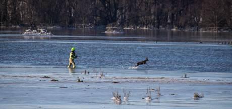 Ree in ijskoud water is brandweer te snel af