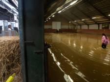 Helpende hand voor Limburgse boeren vanuit de Achterhoek; duizenden kilo's aan ruwvoer voor vee en paarden