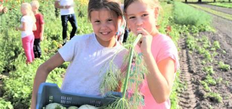 Kinderen leren spelenderwijs over herkomst eten: 'Vroeger had iedereen wel een opa met een boerderij'