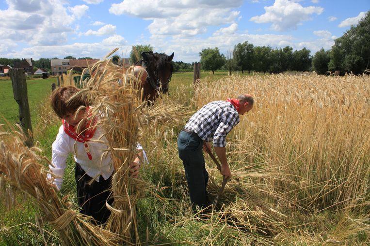 Landbouwers bewerken het veld tijdens de Pikkeling.