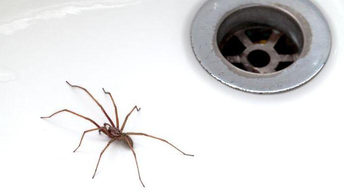 Pour les éviter, gardez vos maisons bien propres