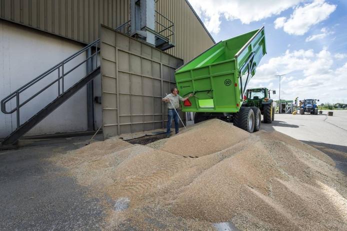 Akkerbouwers lossen maandag massaal graan bij vestigingen van de CZAV, zoals hier in Wemeldinge.