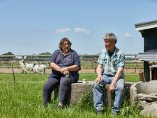 In Beltrum kun je deze week lunchen tussen de koeien