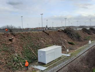 """'Snoeibeurt' langs spoor roept vragen op: """"Bedoeling is bomen bij te planten, niet te kappen"""""""