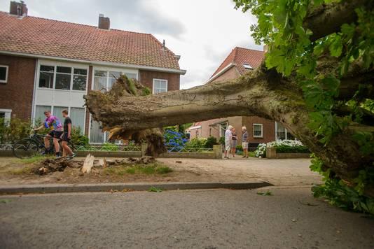 Een omgevallen boom die helemaal van de wortel uit de grond is getrokken en omgevallen is over de hele straat  aan de Burgemeester Suijsstraat in Tilburg.