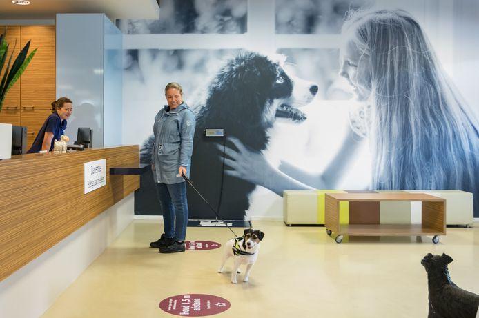 De dierenklinieken in Hoogvliet en Spijkenisse heten voortaan AniCura.