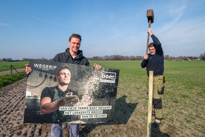 Ruud Mantingh (r.) heeft zijn akker aan de Lokhorstweg in Hierden bezaaid met tarwe, met als doel brood te maken. Daarvoor gaat hij de samenwerking aan met bakker Corné Wegerif uit Harderwijk.