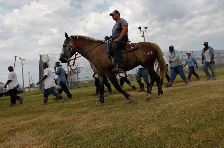 Een bewaker te paard begeleidt gevangenen, die buiten hebben gewerkt, terug naar hun cel in Angola, Louisiana. Ruim de helft van de gevangenen in de VS is zwart of bruin. Beeld AP