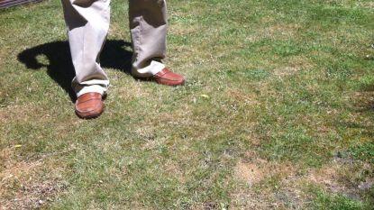 """""""Accepteer gewoon dat je gras even geel wordt"""": zo bescherm je de tuin tegen  extreme droogte"""