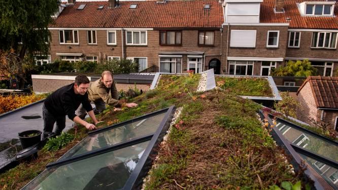 Stormloop op geldpot om stad te vergroenen: Breda trekt nog eens 100.000 euro uit