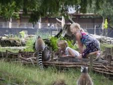 Minder betalen voor kort bezoek aan DierenPark Amersfoort
