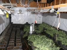 B&B Beveiliging tijdelijk geweerd uit gemeentehuis Tholen na vondst hennepkwekerij
