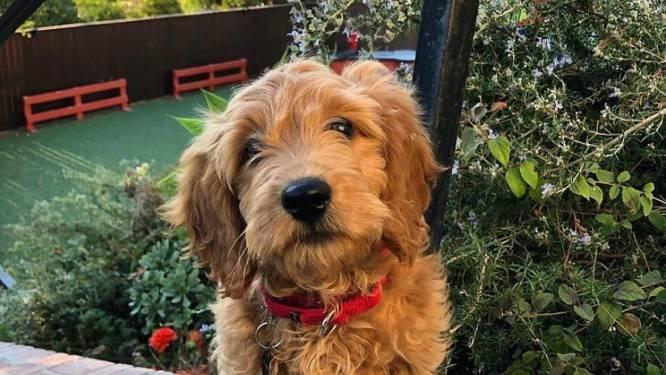 Nieuwe hond van Matthew Perry krijgt eigen Instagram (en heeft meteen 77.000 volgers)