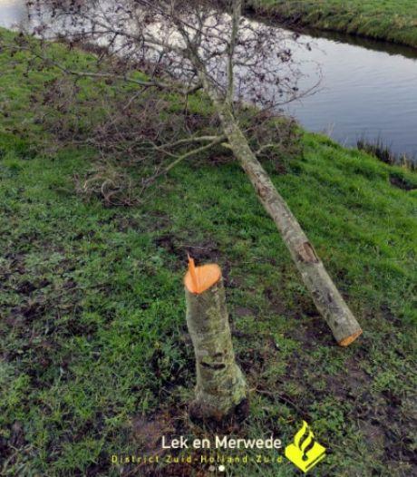 Wijkagent boos over gevelde bomen in Brandwijk: 'Als je wilt zagen, ga als vrijwilliger wilgen knotten'