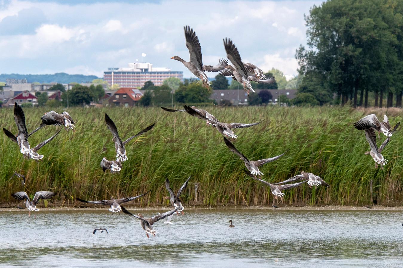 'Het idee de natuur tussen Arnhem en Nijmegen vol te bouwen verdient eigenlijk geen aandacht. Het idee valt gewoonweg niet serieus te nemen.' Foto ter illustratie.