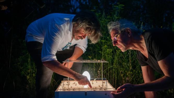 Kunst- en dierenpark Labiomista kondigt eerste nocturne aan