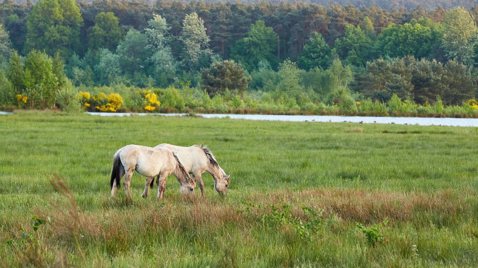 Het Nationaal Park Hoge Kempen is op toeristisch vlak een sterke motor in Limburg.
